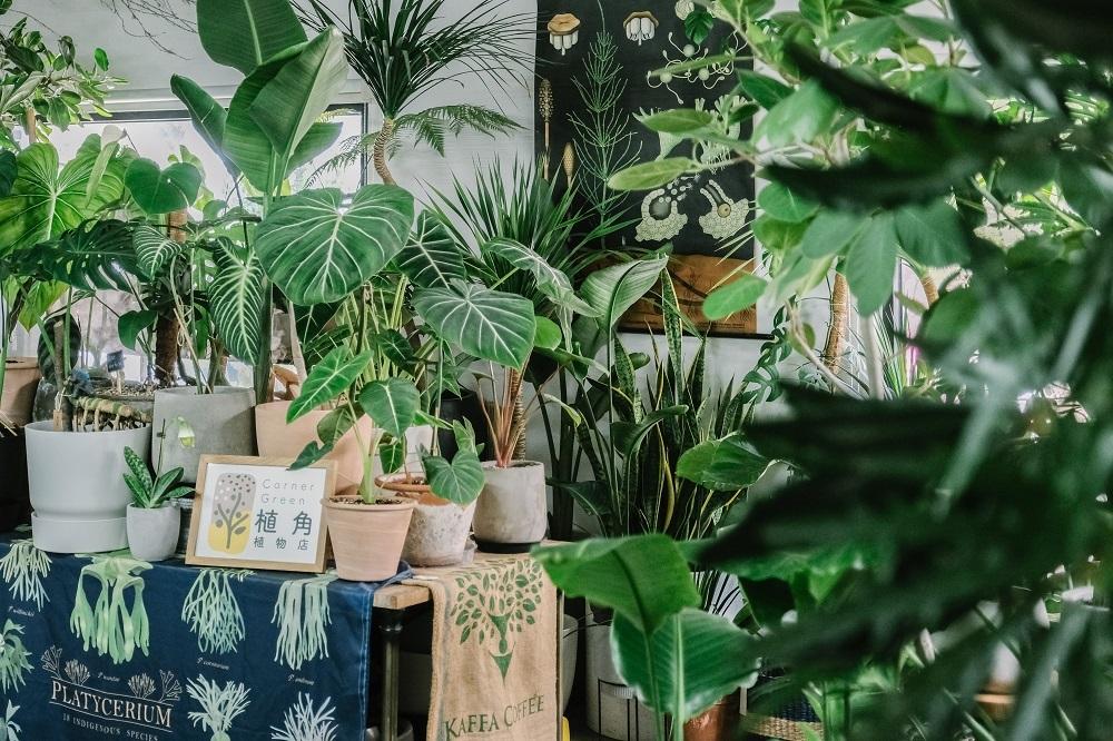 空間/Corner Green植角工作室/植物/創意生活/新竹/台灣