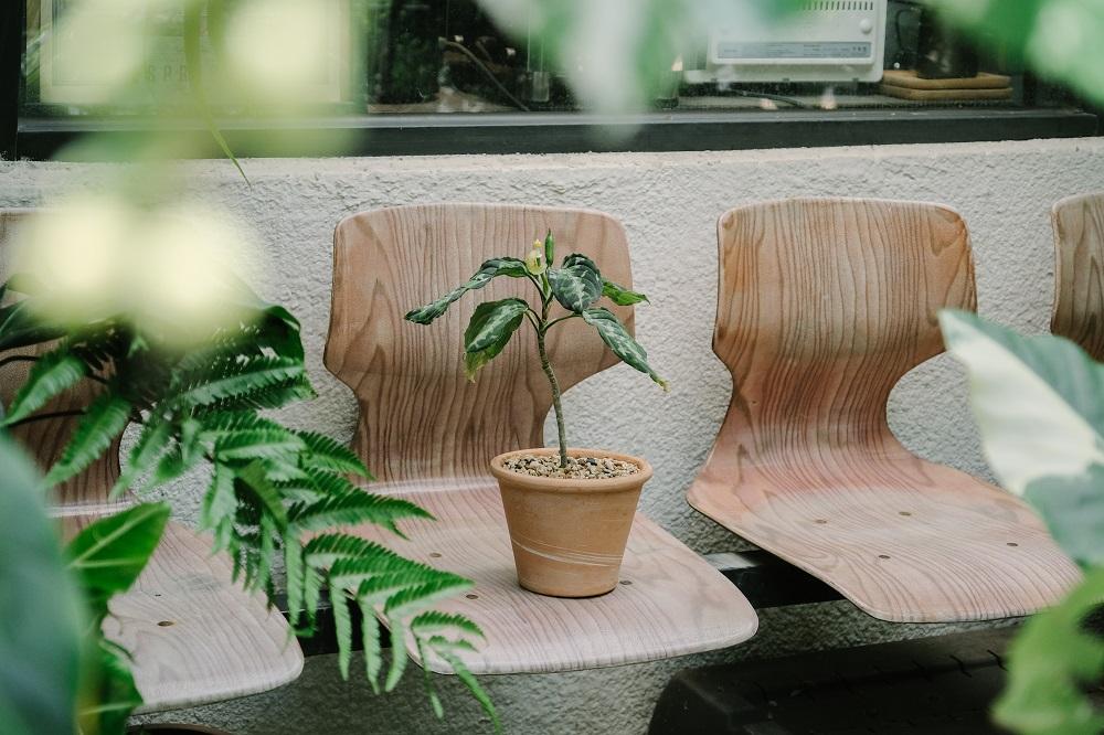 迷彩粗勒草/Corner Green植角工作室/植物/創意生活/新竹/台灣