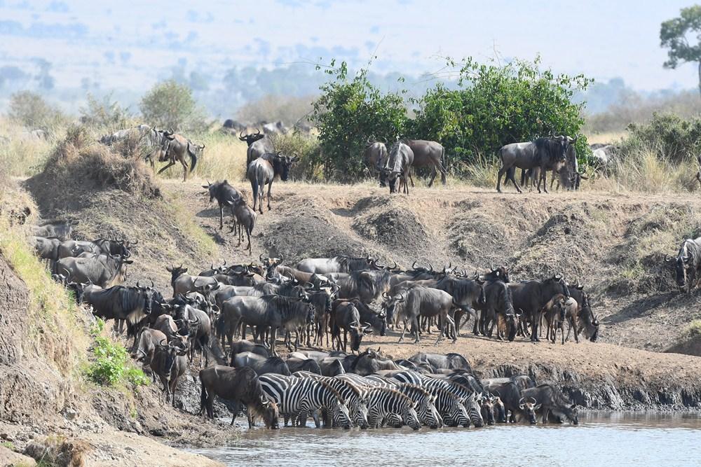 肯亞動物大遷徙