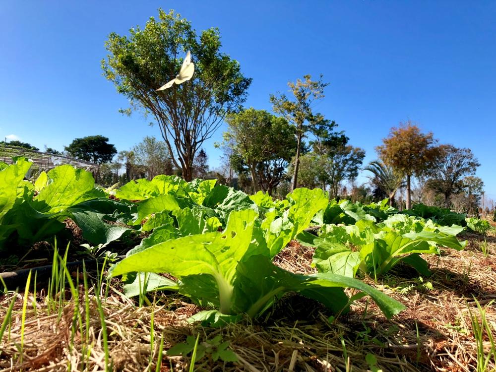 宿營看見農業未來