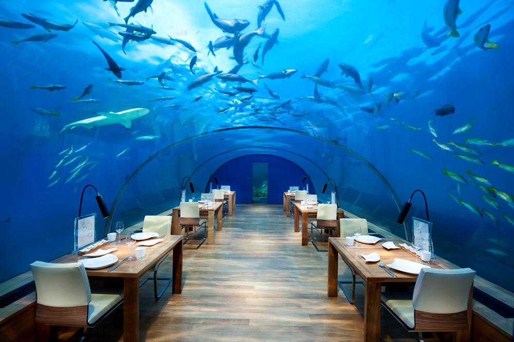 馬爾地夫絢麗海底世界