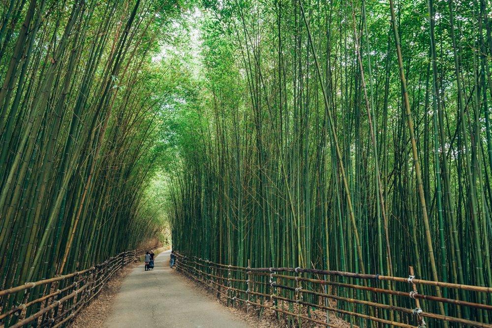 台灣自然唯美色彩